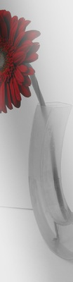 Portfolio - Vases feeling