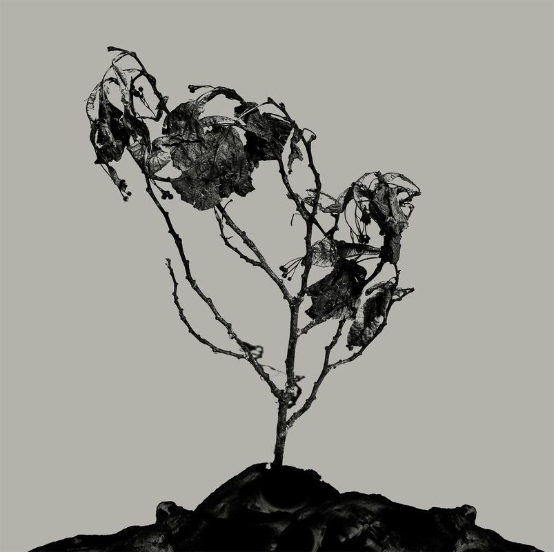 DEHN SORA - Innerwoud + Treha Sektori split ep 2017
