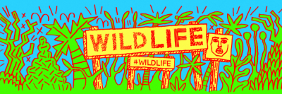 Studio Moross - Wild Life Twitter Banners