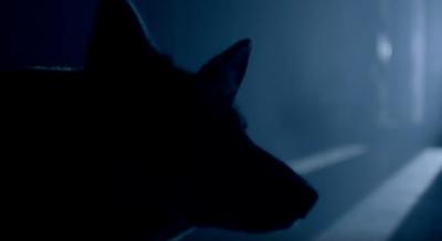 Studio Moross - Tala x Banks Wolfpack