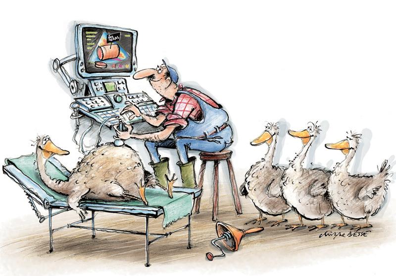 christophe besse - Producteur de foie gras est devenu une activité ou plus rien nest laissé au hasard... Dessin publié dans Néoplanète, je men suis également servi de carte de voeux ! judicieux non à la période des fêtes ?