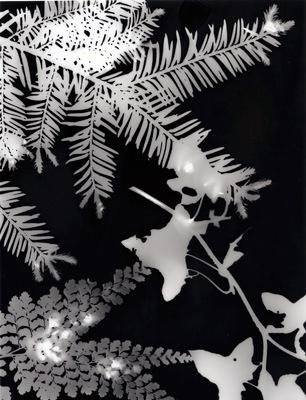 Luciana Caputo - Fotogram en pinhole techniek - basisonderwijs