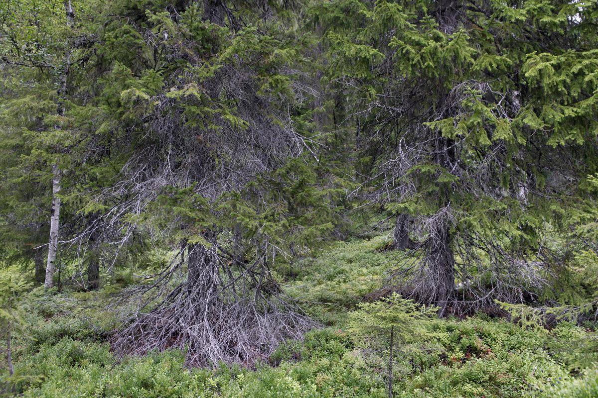 Luciana Caputo - De fotoserie Een afgelegen landschap is een serie fotos gemaakt in het noorden van Zweden en Noorwegen. 2013-2014.