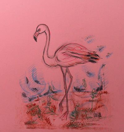 IXIA Artiste - Flamant rose 24 x 28 cm Mine de plomb, fusain, sanguine et crayons de couleur sur papier