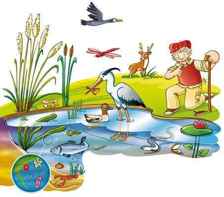 marta biel tres il·lustració - Ciencias naturales 3EP / 4EP  Anaya, 2014