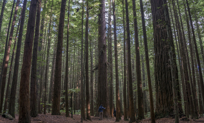 Leyla Kazim | Photography - Whakarewarewa Forest, Rotorua - New Zealand