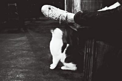 liviastefan - Corinas Fetish & Renes foot