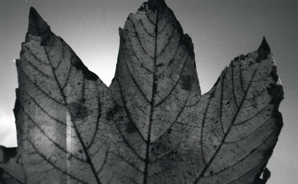 lewys images - Life gone