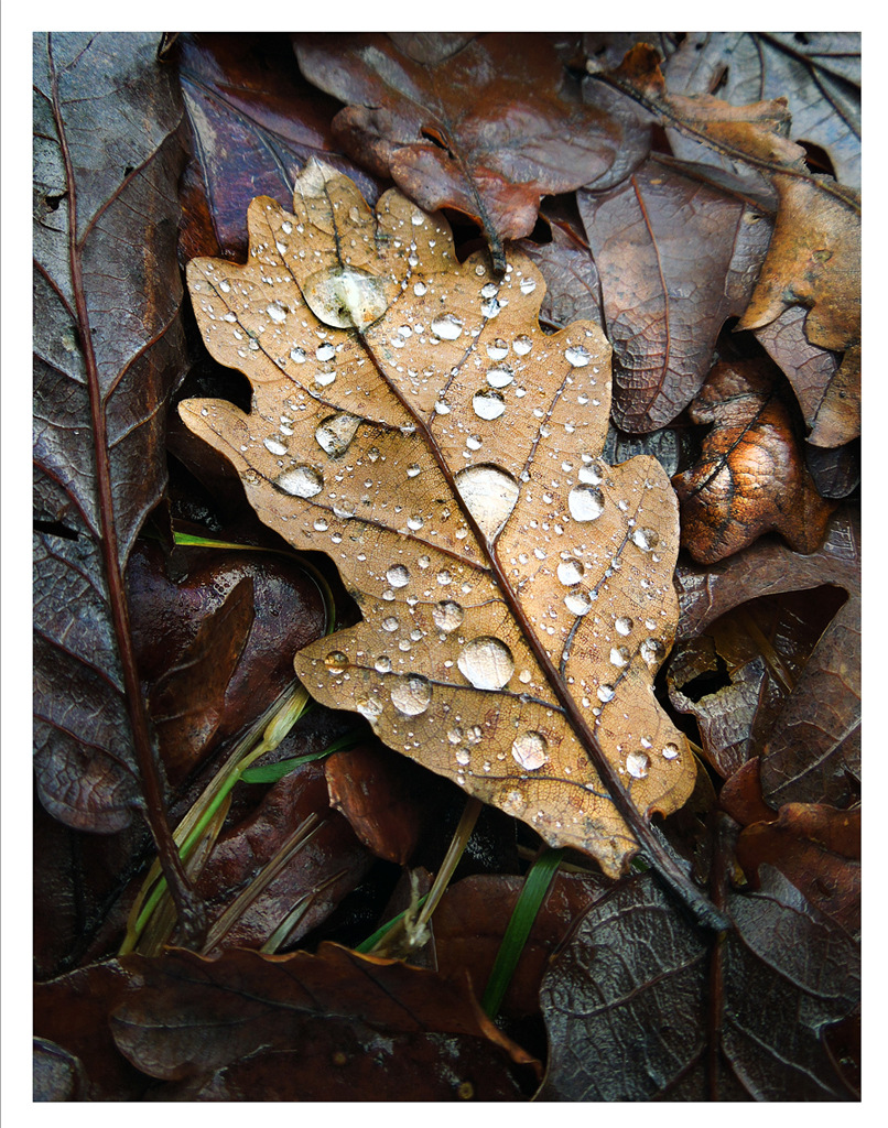 Simon Larson Photography - Leaf with water droplets