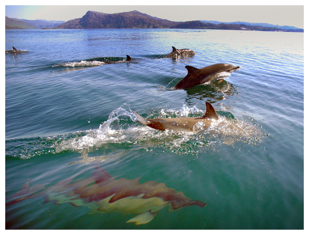 Simon Larson Photography - Dolphins, Sound of Sleat
