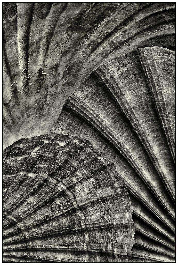Simon Larson Photography - Scallop Shell Texture