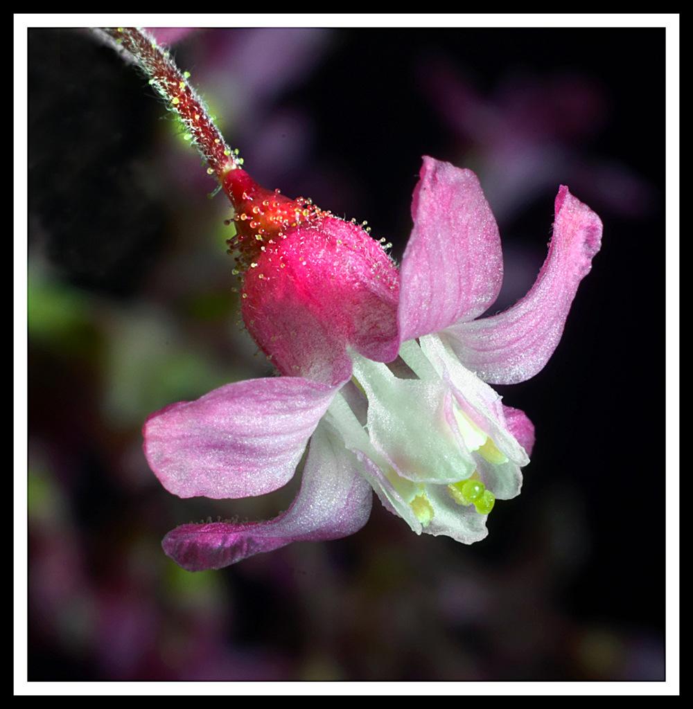 Simon Larson Photography - Blossom