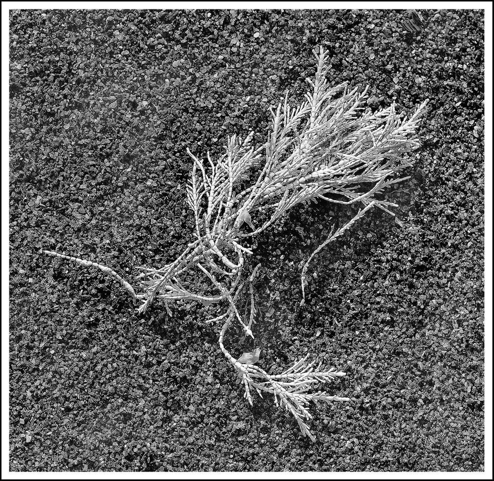 Simon Larson Photography - Coral on Sand