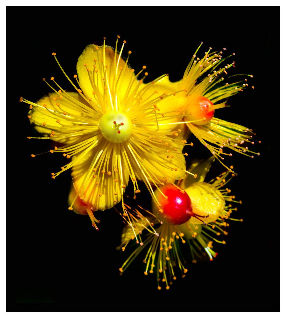 Simon Larson Photography - Armadale Gardens
