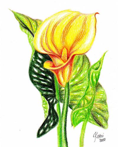 Katri Ketola Art - Flora | Drawings