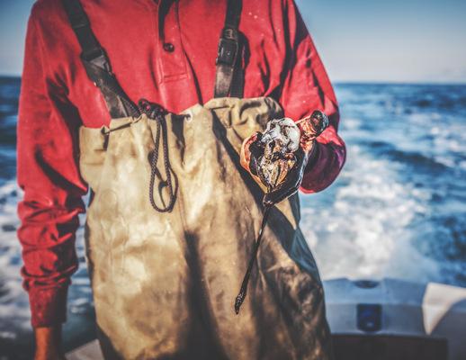 PaoloCipriani Imagestalk - squids
