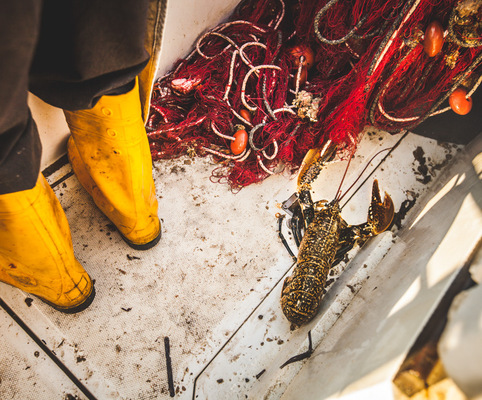 PaoloCipriani Imagestalk - lobster