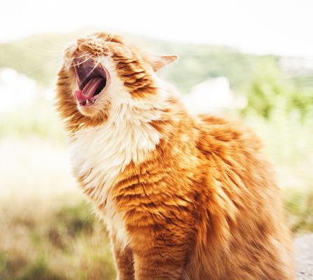 PaoloCipriani Imagestalk - micro yawn