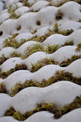 chauvinamandine - Dalles végétales ©Chauvin Amandine