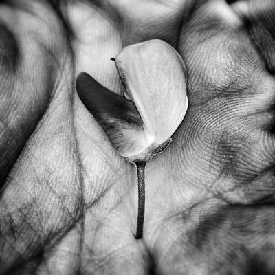 Evita Photography -