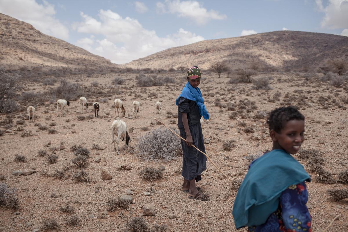Adrienne Surprenant - Au pied des monts Golis, les plaines étaient verdoyantes. Deux ans de faibles pluies ont asséché les pâtures. Au cours des sept derniers mois, les arbres sont devenus secs, lherbe est morte, et Faysal Jama a vu son troupeau décimé par la faim. Il sest endetté auprès de son clan pour acheter du sorgho, une céréale, et nourrir les 120 animaux restants de son troupeau de 300. « Même si je les vends toutes, jamais je ne pourrai rembourser ces dettes, explique-til.