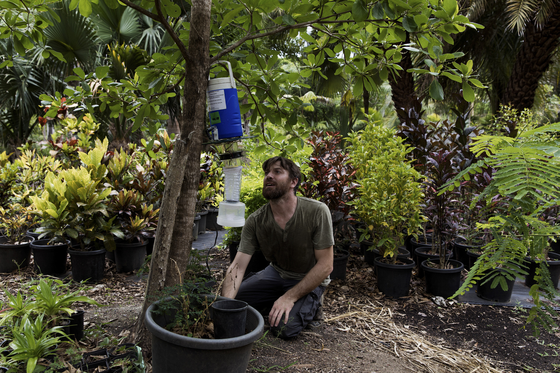 Adrienne Surprenant - 10/01/2019, Nouméa, New Caledonia—Arnaud, the entomologist of DASS, is putting up mosquito traps each week in a plant breeding enterprise close to the airport. He uses the traps to detect if any intrusion of new mosquito species, and monitor the endemic species of mosquitoes present on New Caledonia's island. He goes there every week, but once a month tours the whole island to do the same. The Aedes Aegypti arrived in New Caledonia around the 1860s but was only detected on the whole territory around a hundred years later. This detection of mosquito is key to follow the International Sanitary rules, to protect the territory and the countries with which it does commerce, or has airplane and boat circulation.