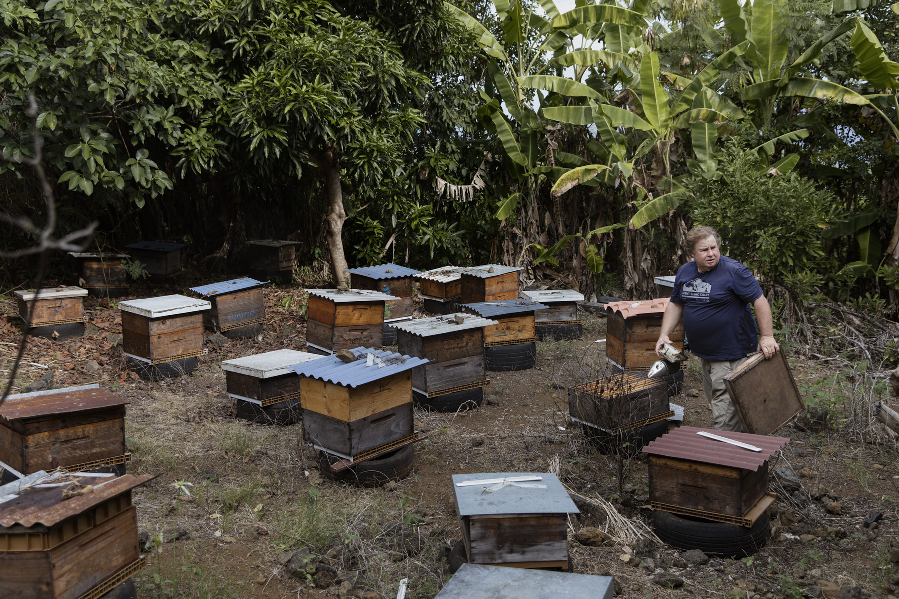 Adrienne Surprenant - 28/04/2019. Petite Isle, La Réunion (France) - Jimmy Hoareau, beekeeper, reportedly lost 85 of his hives due to mosquito control by the ARS about 50 metres from his bees. The problem is that the products used do not only kill mosquitoes. Wildlife renewal takes time. Many people say that two weeks after the LRA they have more mosquitoes because all their predators are dead too. We are told that this is a case of necessity, that there are deaths and that action must be taken, but I do not understand why in agriculture we are trying to reduce the use of insecticides when they are spraying everywhere. We are told that we must choose life or dengue fever, but there must be other solutions. There are researchers who have salaries for this, he says
