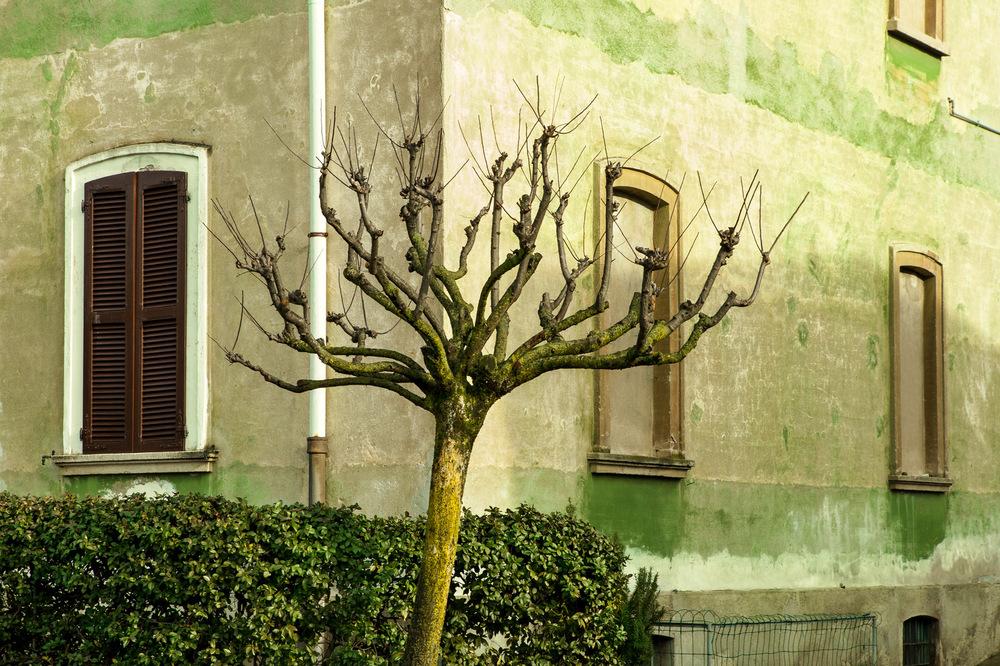 OLIVIA GOZZANO - © albero o muro, Crespi DAdda 2014