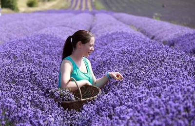 Paul Marriott Photography - Lavender picking