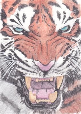ilustrasoles - Tigre Acuarela
