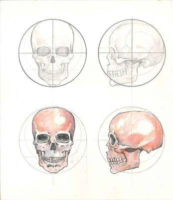 ilustrasoles - Estudio Craneo