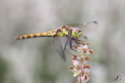 Winedale Photography - Dragon fly