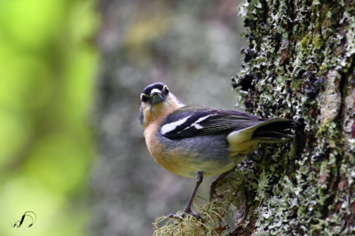 Winedale Photography - Another azorean bird