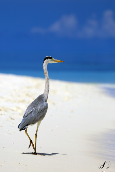 Winedale Photography - Heron on vacation