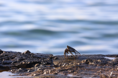 Winedale Photography - Crab
