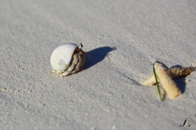 Winedale Photography - Herman the hermit crab