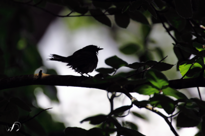Winedale Photography - Silhouette bird