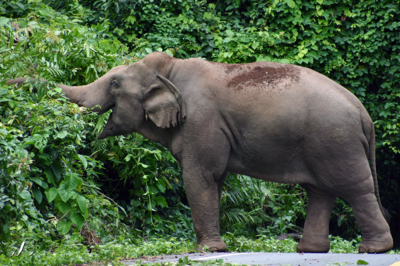 Winedale Photography - Elephant on the road