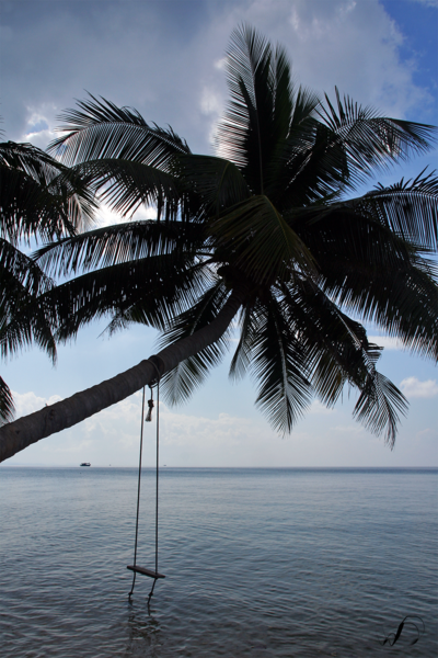 Winedale Photography - Palm swing