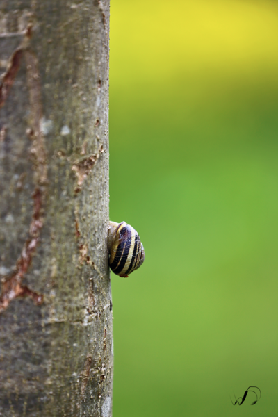 Winedale Photography - Snail going up