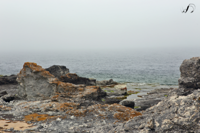 Winedale Photography - View off of Gotland