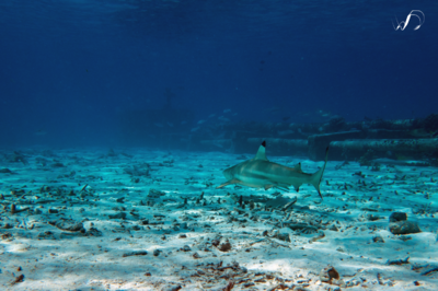 Winedale Photography - Reef shark