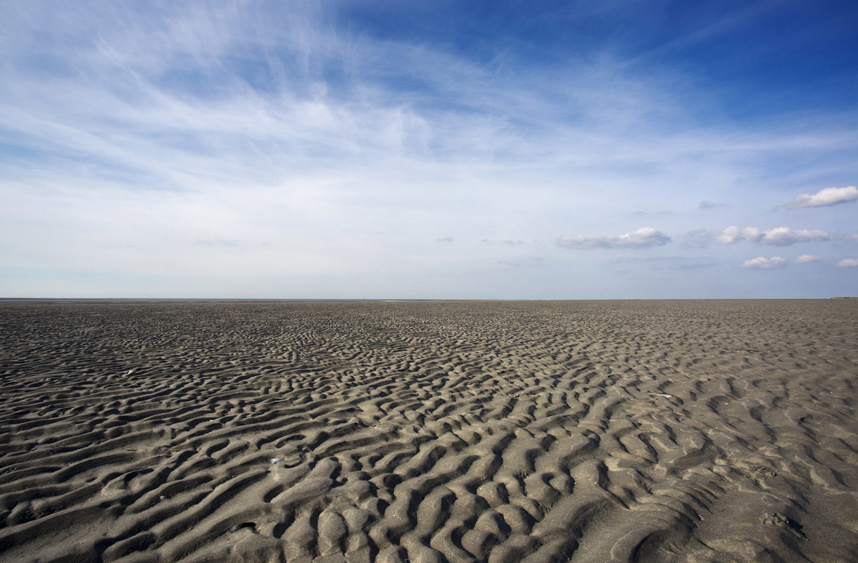 Birds around the North Sea - Mud flats, wadden island Rottumeroog, the Netherlands