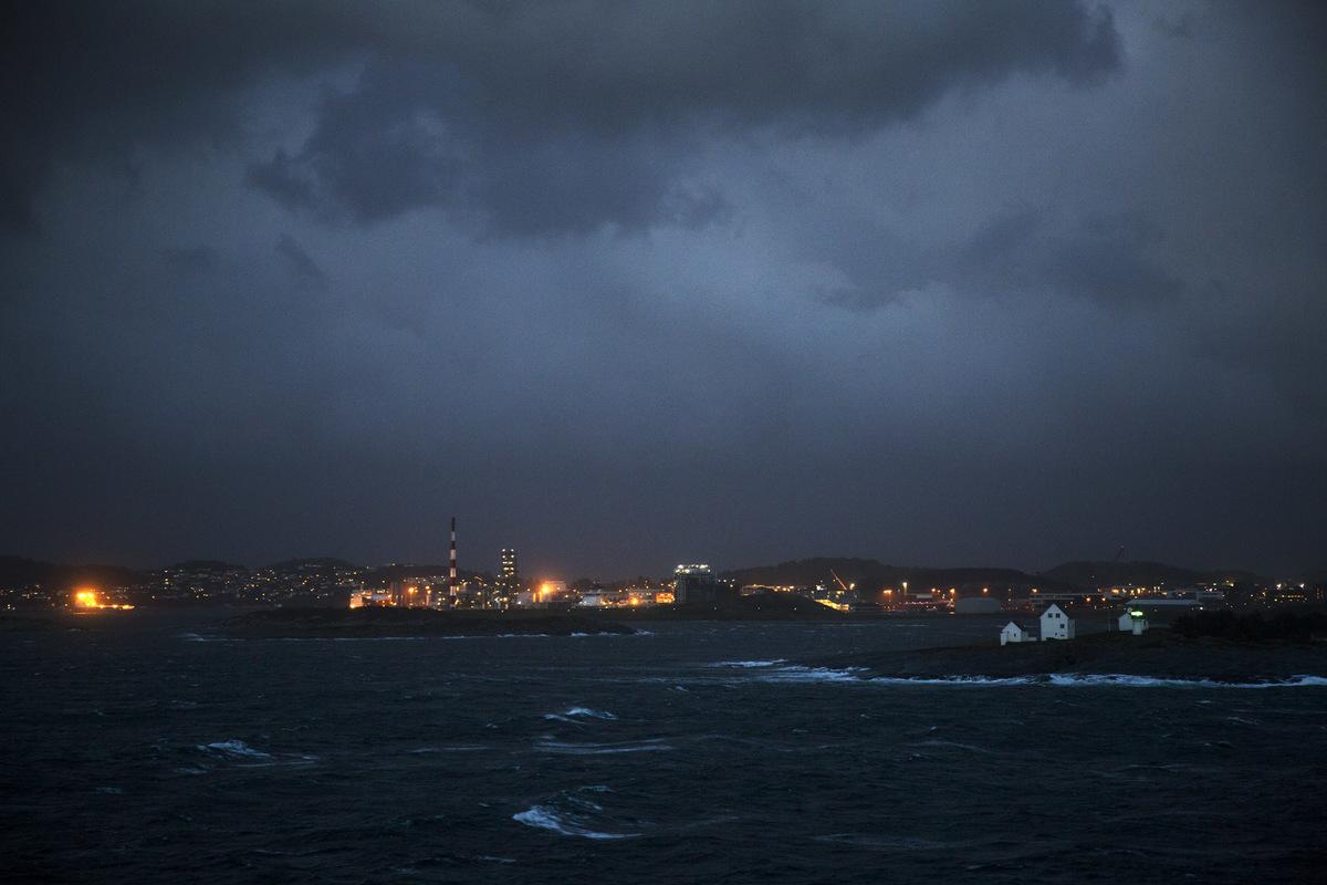 Birds around the North Sea - Sijmen Hendriks Nature Photography - Tananger, Norway