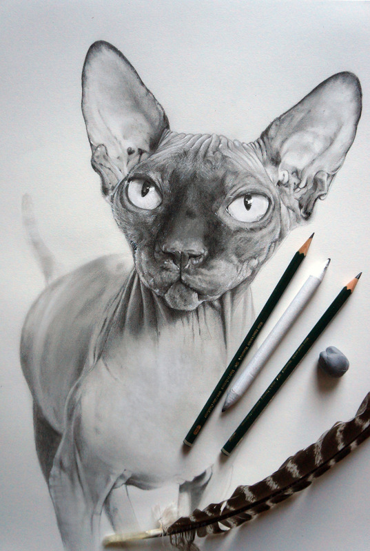 www.mieke-maes.com - Sphynx James Graphite drawing A3