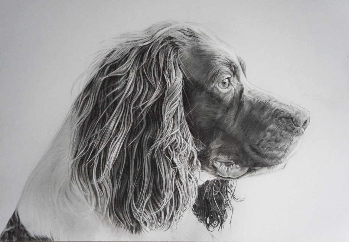 www.mieke-maes.com - Graphite drawing A3