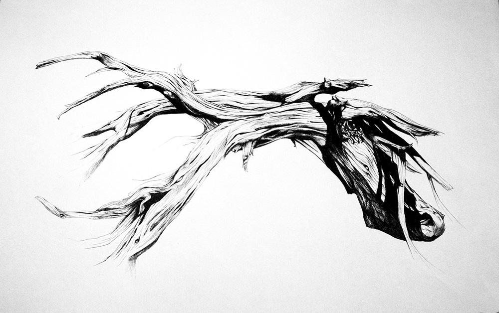 Romina Scagliarini - Wood study  Fineliner | A3