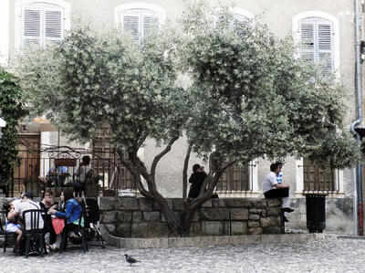 studio svart ateljé vit - Olive tree on the village square