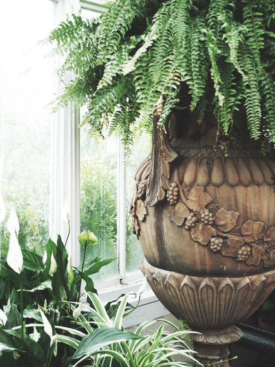 studio svart ateljé vit - Fern in urn