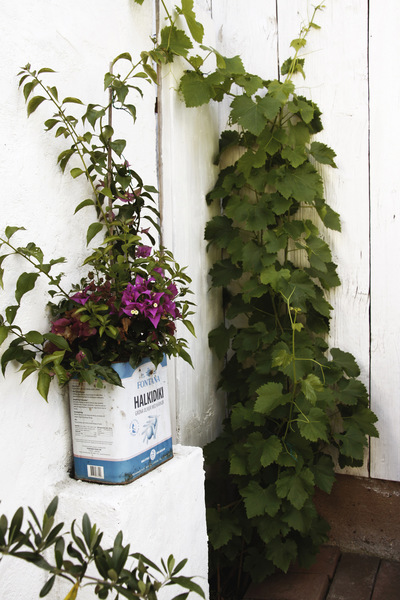 studio svart ateljé vit - A corner in the garden with vines and bougainvillea